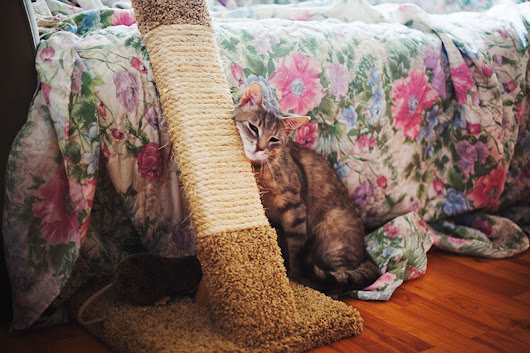 Stable, Durable, Sleek: Real Wood Cat Scratch Posts & Scratching Cat Trees