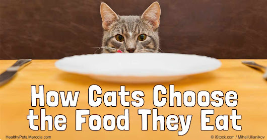 How Cats Choose the Food They Eat
