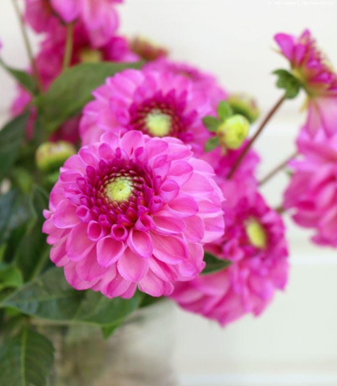 http://i402.photobucket.com/albums/pp103/Sushiina/cityglam/cityglam001/blumee_zpsb6tmdbq7.jpg