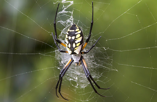 Learn about Spiders in Oregon: Pointe Pest Control