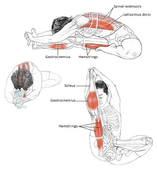 Physics Of Yoga Janu Sirsasana