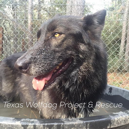 Texas Wolfdog Project | Visitation & Workday