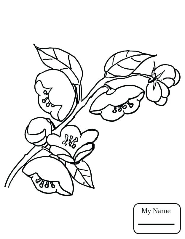 Audrey Hepburn Coloring Pages At Getdrawingscom Free For Personal