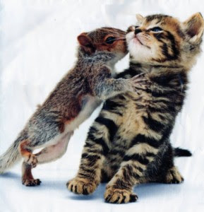 "perierga.gr - Γάτα ""υιοθέτησε"" τρία νεογέννητα σκιουράκια!"