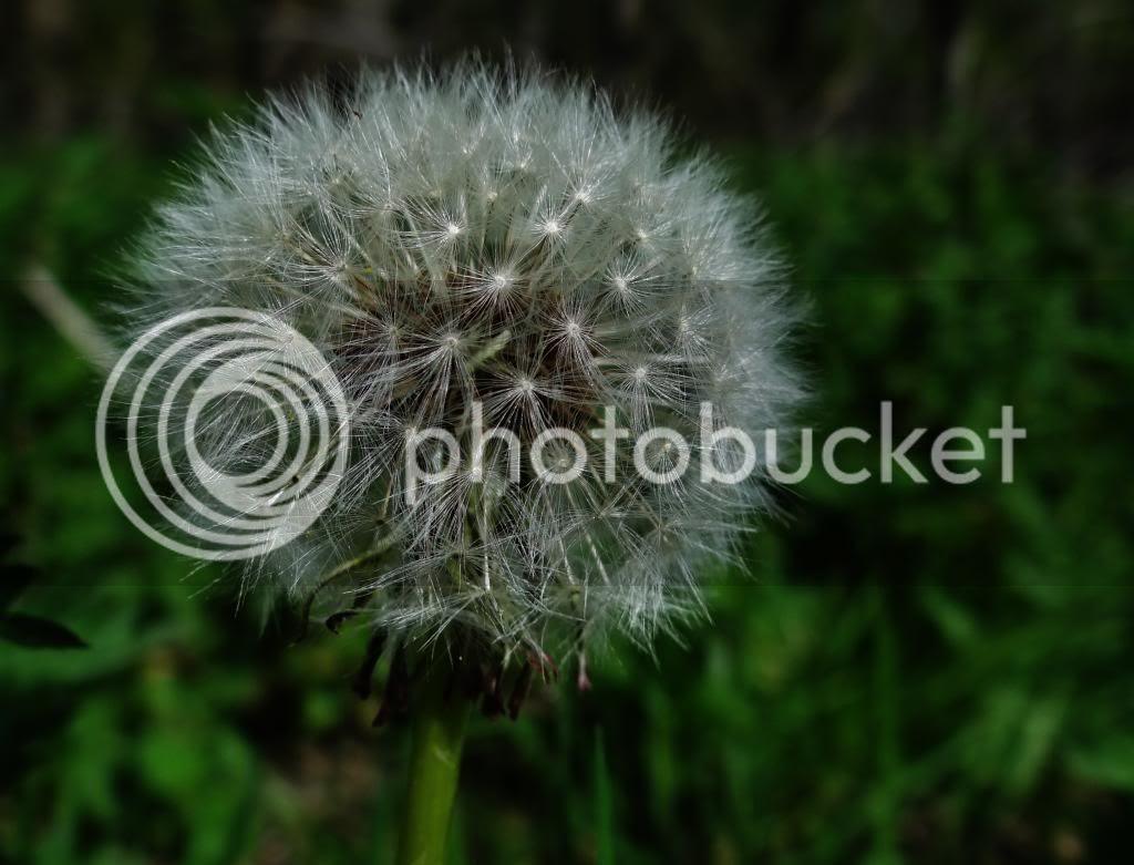photo a25_zps9c9806d3.jpg