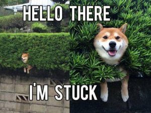 10 Animal Memes To Cheer You Up The Hot Feed