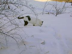 Aye Aye Digs In Snow