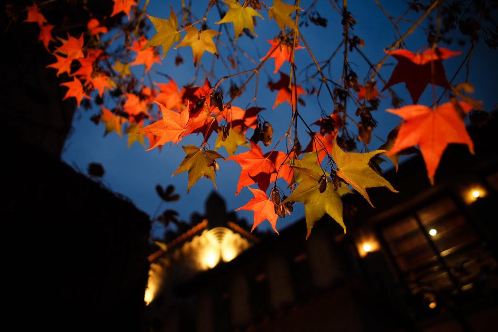 *天空之城|楓葉紅了