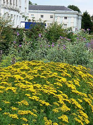 fleurs jaunes Greenwich.jpg