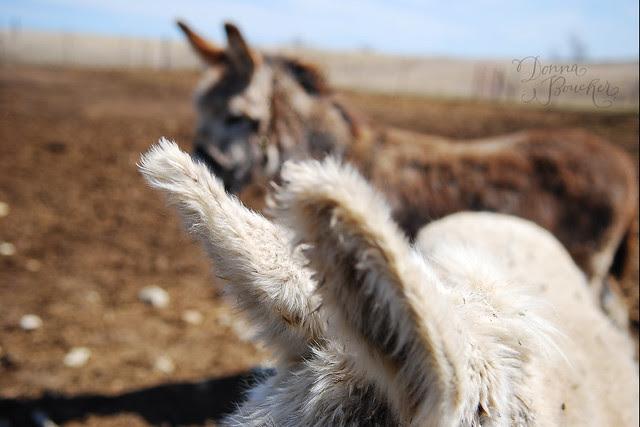 donkeyears-lo