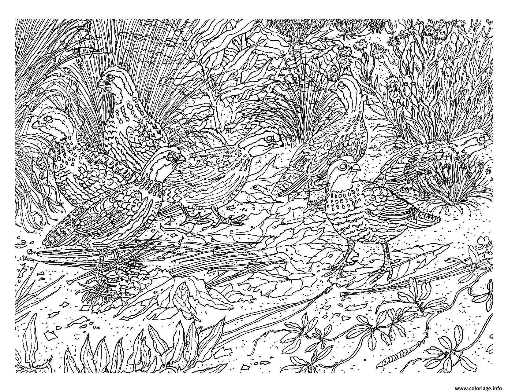 Coloriage Difficile Oiseau Dessin  Imprimer