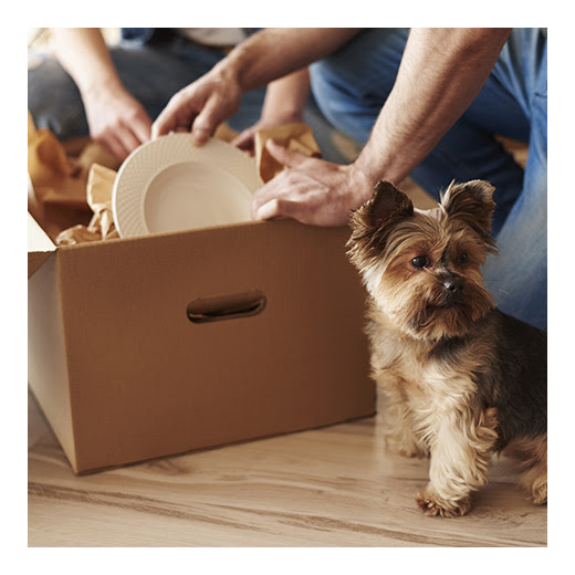 Tips for Moving with Pets | Nora Commons on the Monon