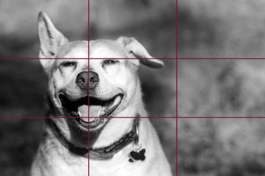 Rule of Thirds in Photography: A Guide for Beginners