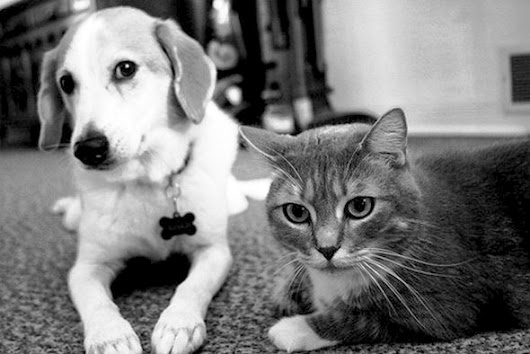 100 Ways to Make Your Cat or Dog Happy