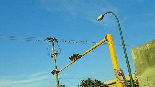 Semaforo y aves 01 Enero de 2011
