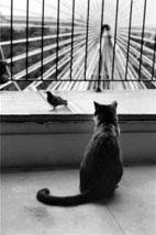 Gato Antento, de novo de Cartier-Bresson