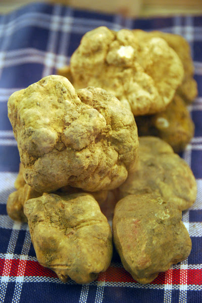 Umbrian White Truffles - from Gubbio