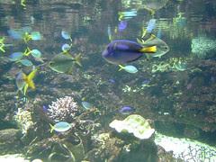 Dalam Sydney Aquarium, Sydney, Australia