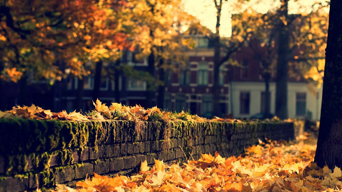 http://images6.fanpop.com/image/photos/35300000/Autumn-in-the-city-autumn-35392312-1365-768.jpg