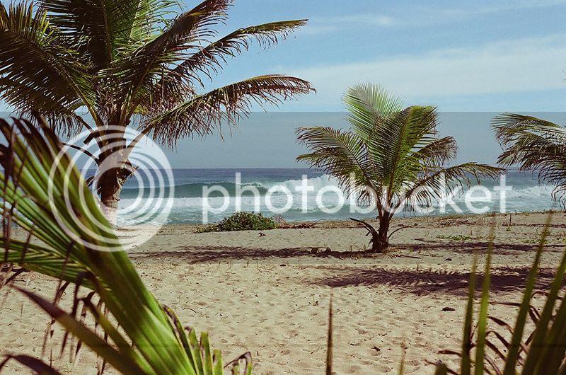Coco frio, Puerto Rico, Surf, Contax G2, Film, Palm trees, Crash Boat Beach, Denasty, Sunrise, Holiday, Travel, photography, photo Wavepalms_zpsjo7hevjz.jpg
