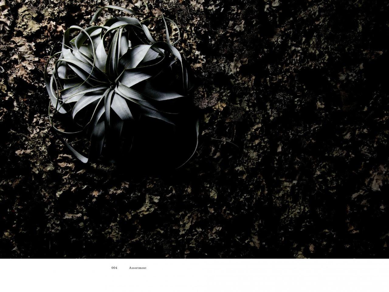 encyclopedie-fleurs-05