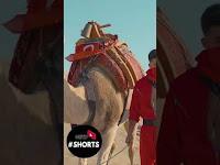 Cioman - Yandı Gönül #shorts - netd müzik