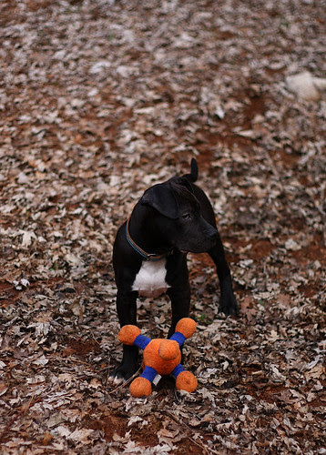 Sherman Loves Toys