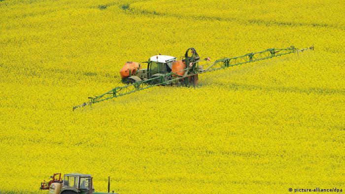 Pflanzenschutzmittel auf ein Feld mit Winterraps (Foto: picture-alliance)