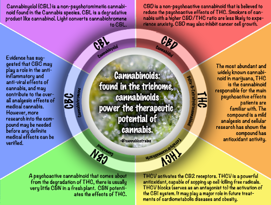 Video: Cannabinoid Profiles - THC, THC-A, THC-V, CBD, CBG, CBN, CBC & Terpenes