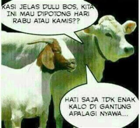 update gambar meme hewan qurban idhul adha  lucu gokil