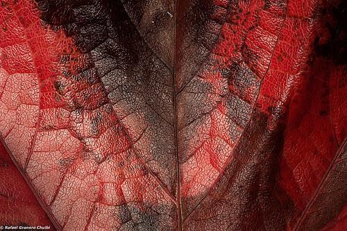 Carne de otoño by Rafa Granero
