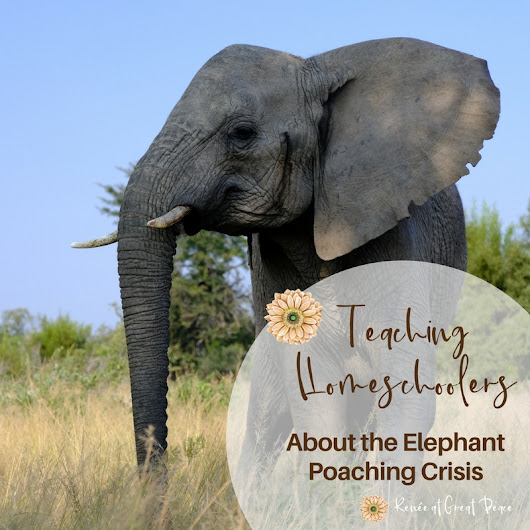 Teaching Homeschoolers about the Elephant Poaching Crisis