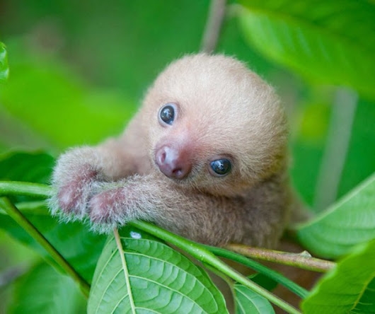 20 Super Cute Sloth Photos - Travels And Living