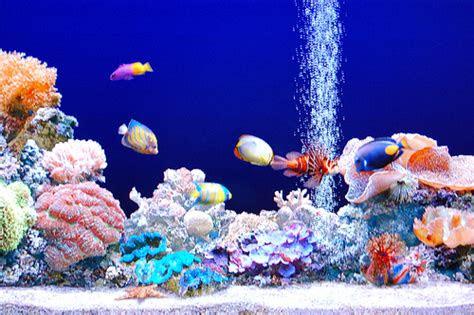 moving fish bowl wallpaper wallpapersafari