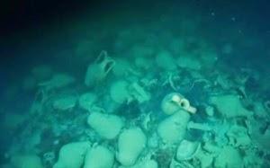 Το ναυάγιο ενός μεγάλου βυζαντινού πλοίου εντοπίστηκε από δύτες στην Ταυρίδα (Κριμαία)
