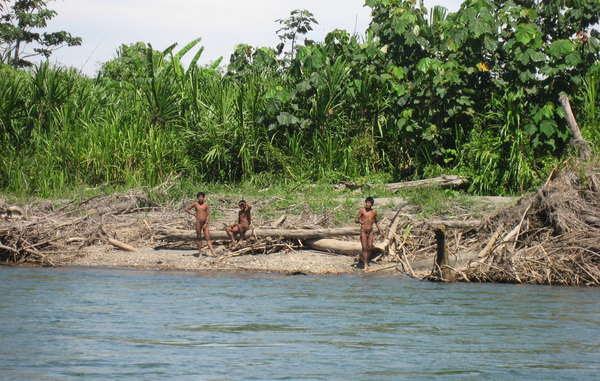 On estime que c'est l'exploitation forestière illégale qui force les Indiens à fuir.