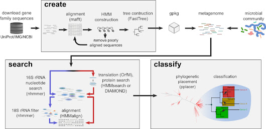 "New tool of interest: GraftM: ""a tool for scalable, phylogenetically informed classification of genes within metagenomes"""