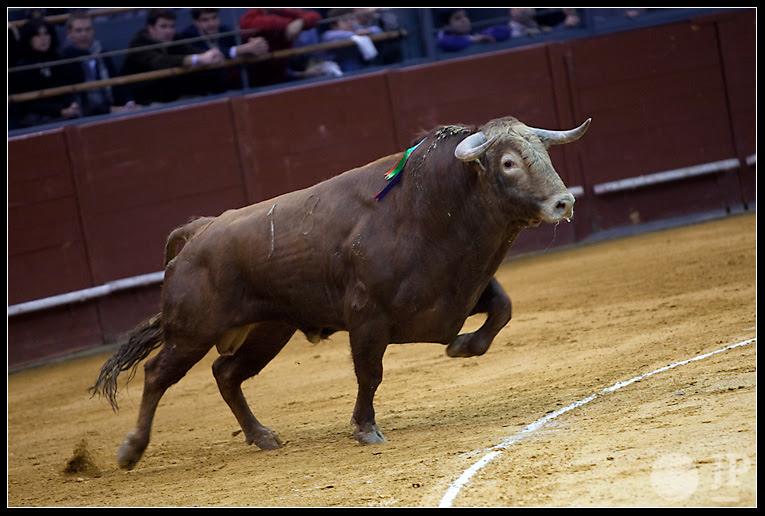 Toro-Domingo-Hernandez