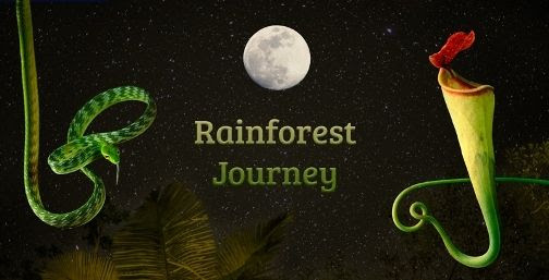 photo Rainforest Journey Night-Collage-3-HR_zpsqvliyytz.jpg