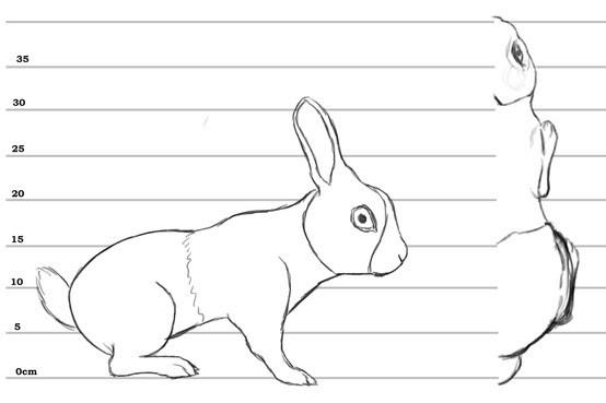 Animal blueprint model sheet | 3D Modeling | Pinterest