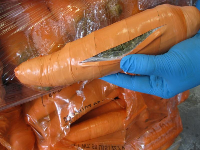 Marijuana hidden in a carrot-like package, part of a total of 2,493 pounds of marijuana seized by CBP officers at Pharr International Bridge in a carrot shipment