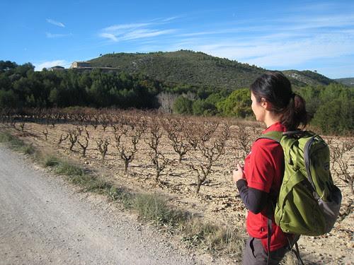 Vandring vid vingårdar