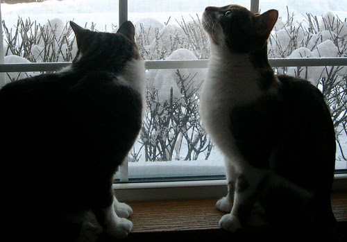 The cats enjoying the view