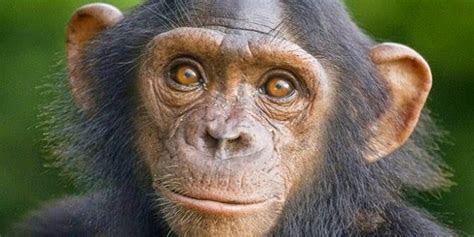 koleksi  binatang lucu tapi berbahaya gambargambarco
