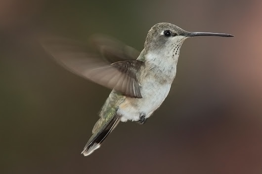 In Which I Dream of Humming Birds – Joey Harpel