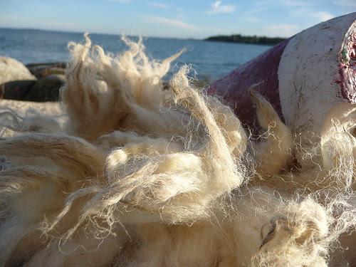 P1030291 by Walking Wool