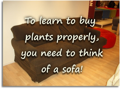 How to buy plants properly – 5 golden rules