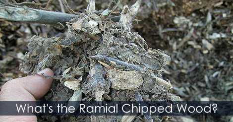 How to Make Mulch - Making your Own Wood Chip Mulch