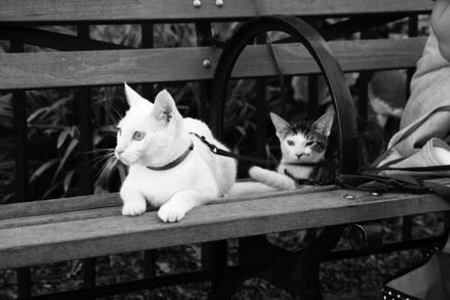 Cats in Brooklyn