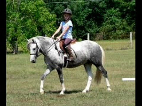 Horses And Ponies For Sale | celebrity image gallery